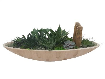Photo of flowers: Cream Succulent Boat