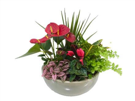 Photo of flowers: Planter with Anthurium