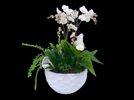 Photo of flowers: Orchid Planter