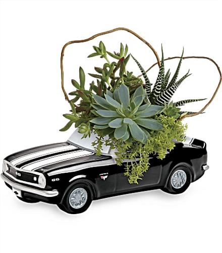 Photo of flowers: Chevy Camaro Succulent Garden