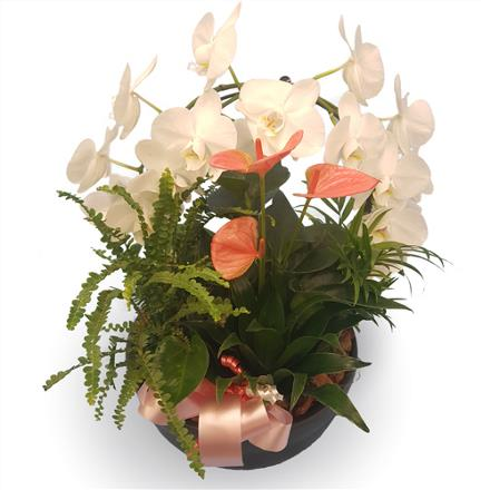 Photo of flowers: Orchid hoop / Pink Anthurium  BF11161