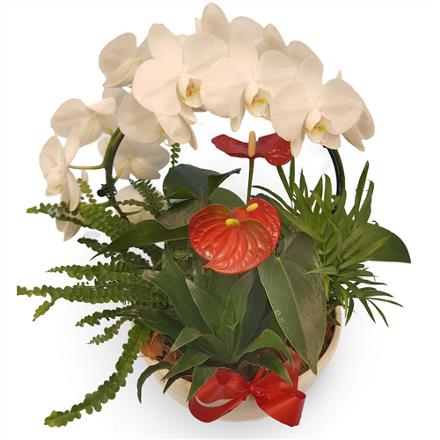 Photo of flowers: Orchid hoop / Red Anthurium BF11162
