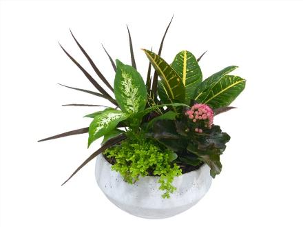 Photo of flowers: Round Mixed Tropical Planter