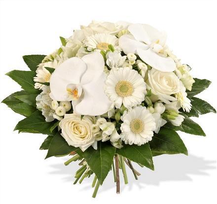 Photo of flowers: Adonis