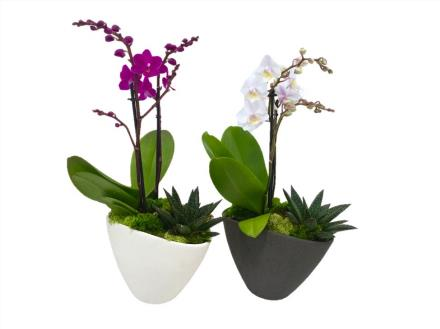 Photo of flowers: Single Orchid Planter