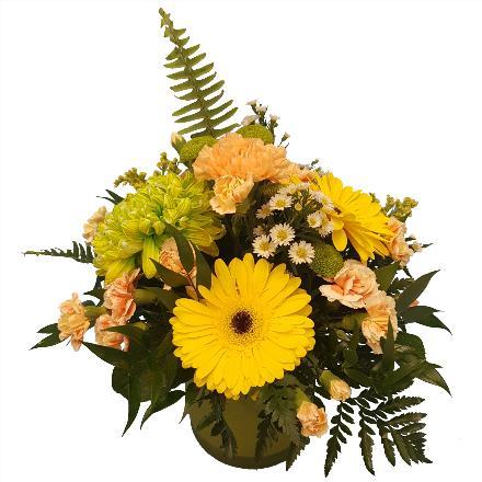 Photo of flowers: Sun Burst  BF11220