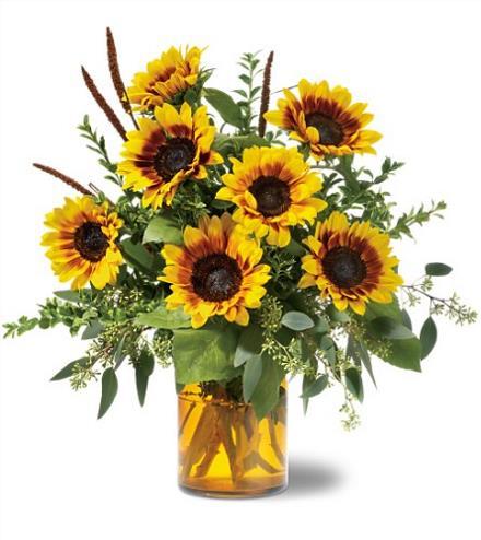 Photo of flowers: Sunrise Sunflowers