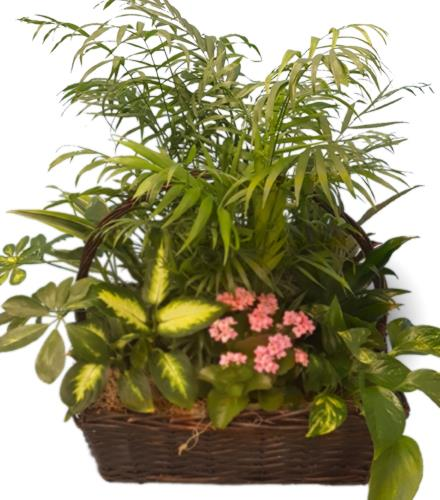 Photo of flowers: PLANTER   BF11265