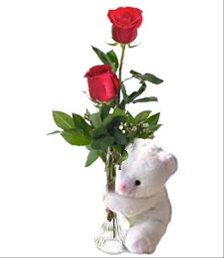 Photo of flowers: Two Roses and Teddy Bear