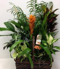 Photo of Large Tropical Planter - BF1133