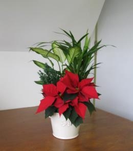 Photo of Holiday Planter #1 with :Poinsettia - JJ1138