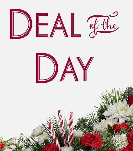 Photo of flowers: Deal of the Day Seasonal