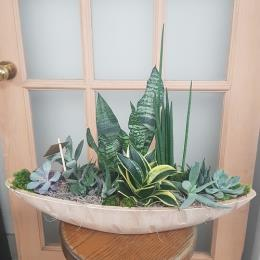 Photo of flowers: Mixed succulents ceramic boat 2 3 inches