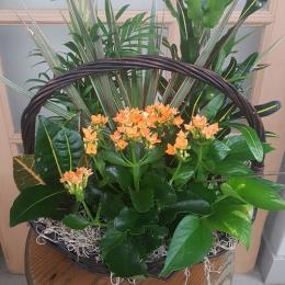 Photo of flowers: Mixed Planter Basket yellow/orange flowers