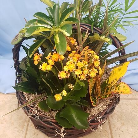 Photo of flowers: Planter with yellow or orange