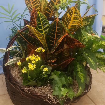 Photo of flowers: Planter with kalanchoe