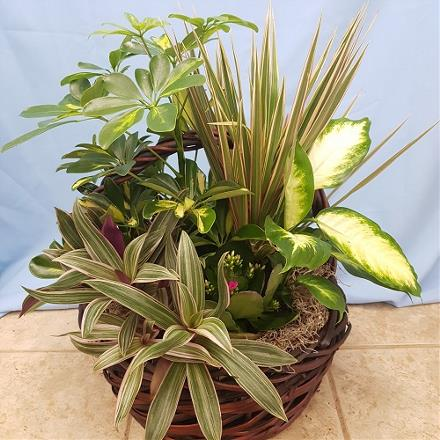Photo of flowers: Green Day Planter
