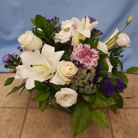 Photo of flowers: White Ambrosia