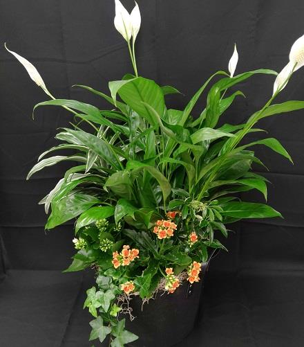 Photo of flowers: Mixed Planter  Tall