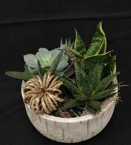 Photo of flowers: Succulents in Ceramic