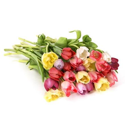 Photo of flowers: Loose Mixed Tulips Gift Wrapped