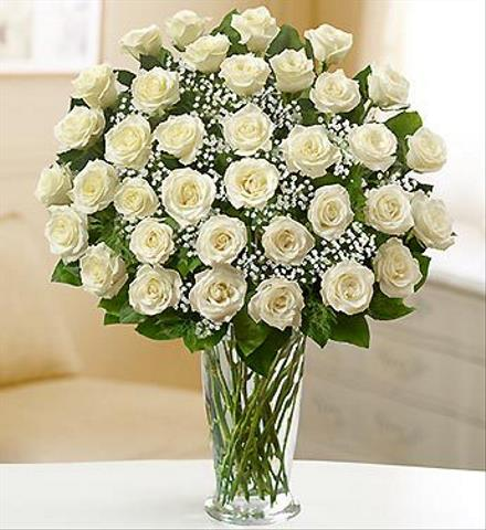 Photo of flowers: 36 White Roses with Babys Breath