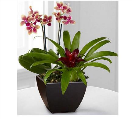 Photo of flowers: Planter Bromelaid and Orchid