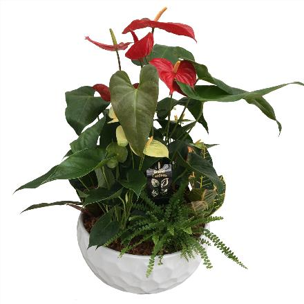 Photo of flowers: Anthurium Planter  Tall