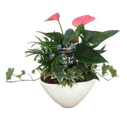 Photo of flowers: Anthurium Planter White Medium