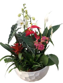 Photo of flowers: New Giant Orchid Planter