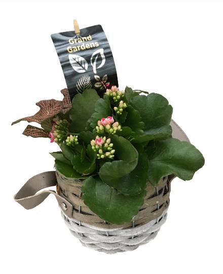 Photo of flowers: New Small Wicker Planter