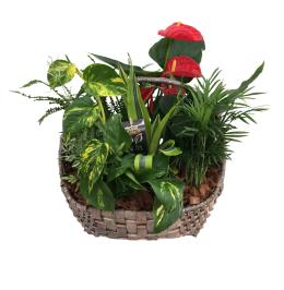Photo of flowers: New Giant Wicker Planter
