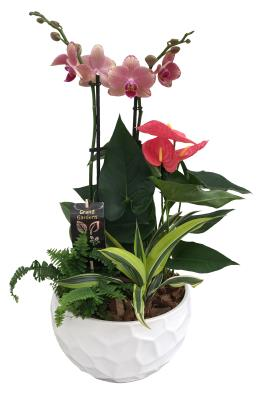 Photo of flowers: Round Orchid Planter XL