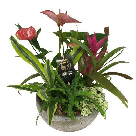 Photo of flowers: Anthurium XL Washed Stone Bowl