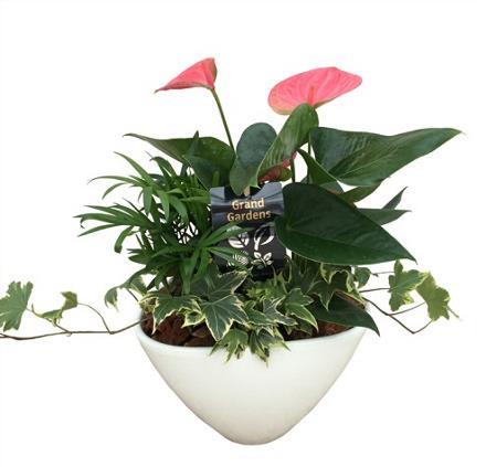 Photo of flowers: Anthurium Planter White Cone Ceramic