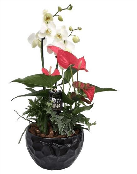 Photo of flowers: Round Orchid Planter