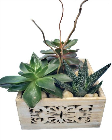 Photo of flowers: Succulent planter box