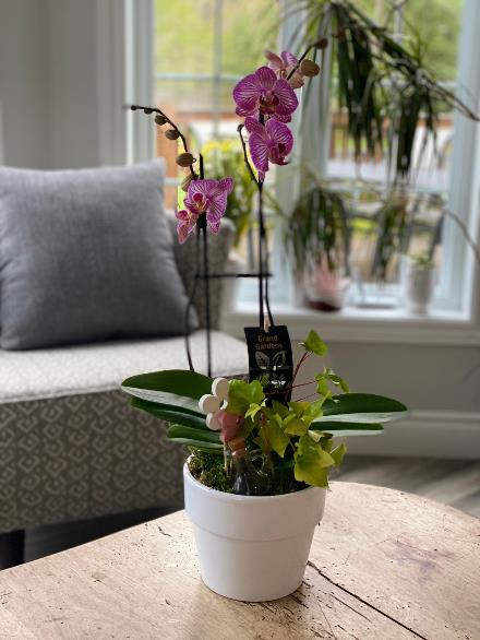 Photo of flowers: Classic Orchid Planter BF11864