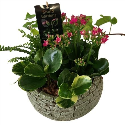 Photo of flowers: Cai Brick Tropical Planter