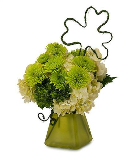 Photo of flowers: Shamrock in Vase