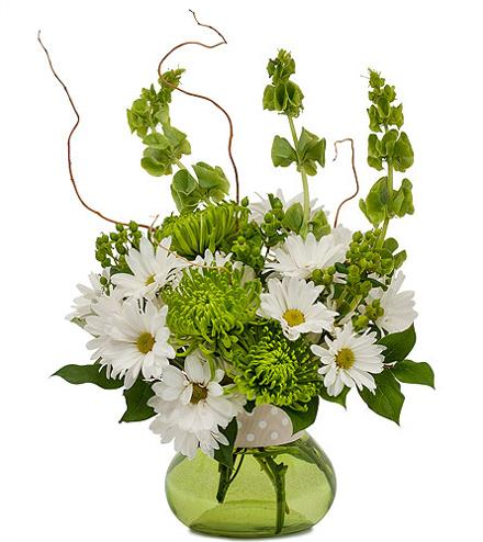 Photo of flowers: Dots and Daisies in Vase