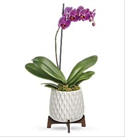 Photo of flowers: Teleflora's Architectural Orchid Plant