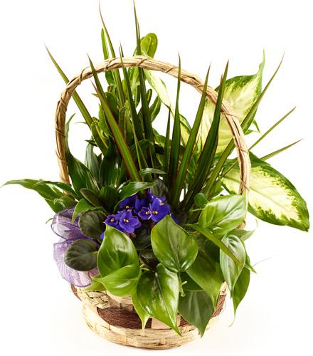 Photo of flowers: Planter basket with Mixed Plants and butterfly