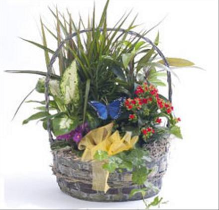 Photo of flowers: Colorful Planter Basket
