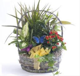 Photo of Colorful Planter Basket - BF1201