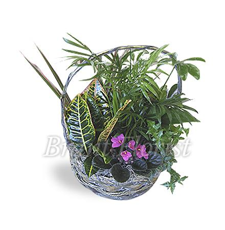 Photo of flowers: Planter Basket Mixed Live Plants