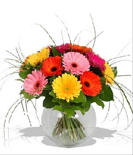 Photo of flowers: Gerbera Mixed Colors Vased