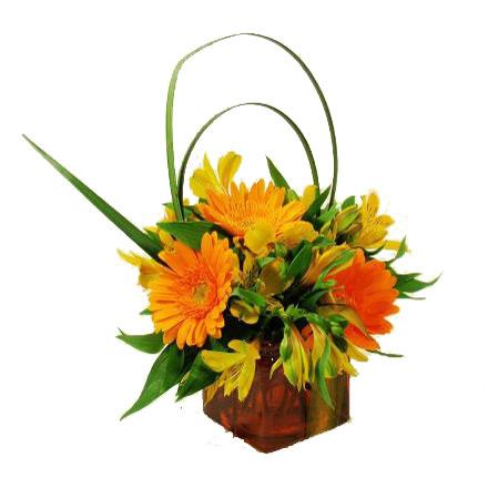 Photo of flowers: Gerbera in Cube Vase