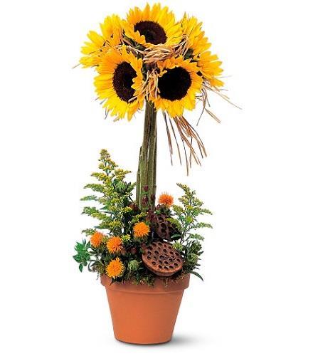 Photo of flowers: Sunflower Topiary