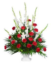 Photo of Gladioli or Snaps Carnation Tribute MACHE - YY11